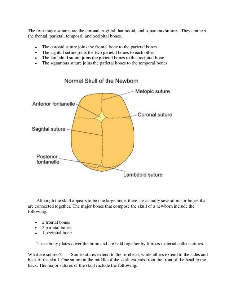 sagittal suture definition - 768×994