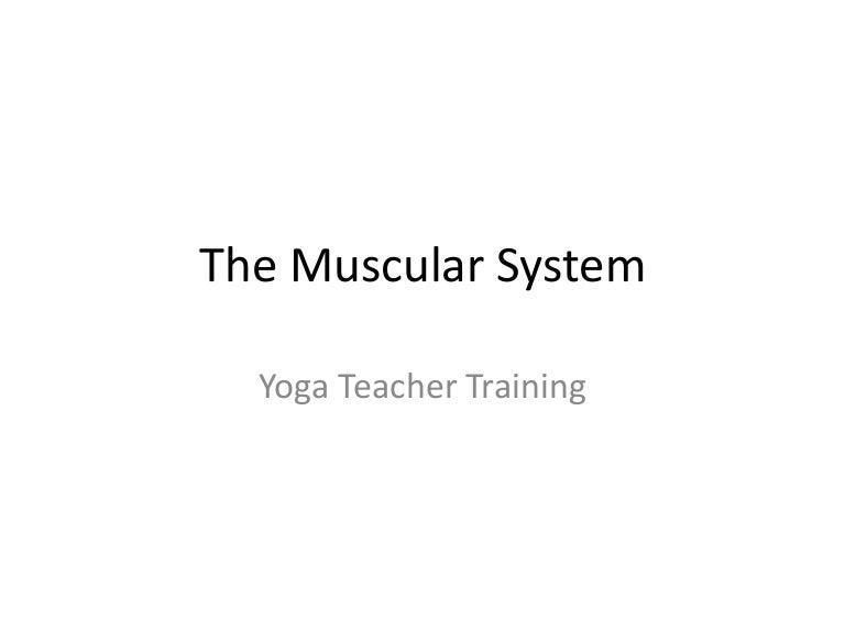 The Muscular System Tt
