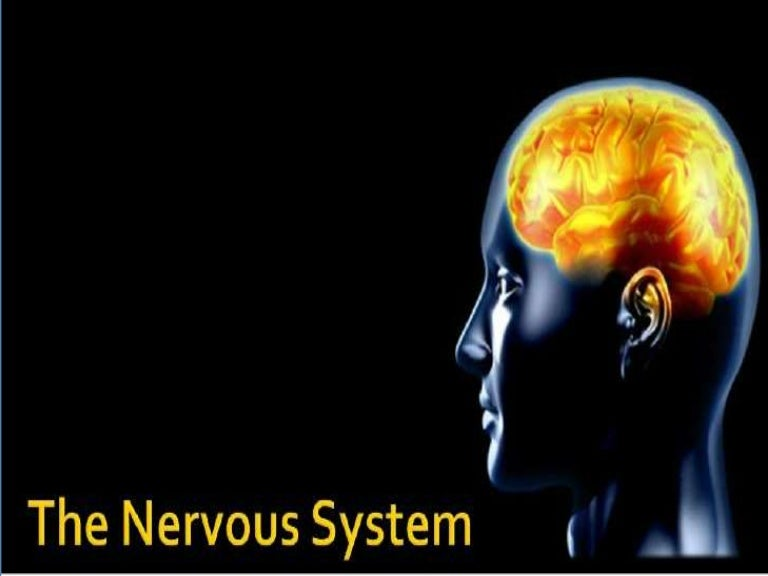 The Nervous System Its Types The Human Brain Functions And Fun Fac
