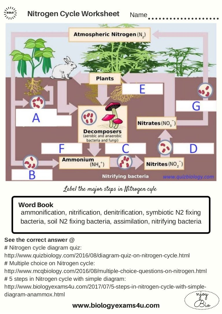 The Nitrogen Cycle worksheet – Nitrogen Cycle Worksheet Answers
