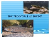 """The troot in the shed"" by Hannah and Rebecca"