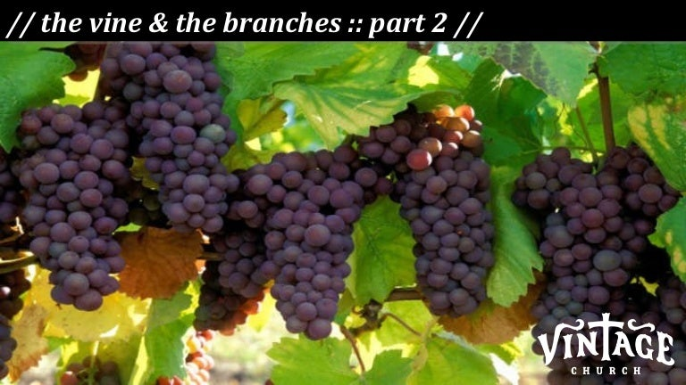 The Vine and The Branches - Part 2
