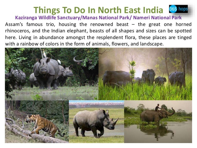 essay on wildlife sanctuaries in india Essay on measures for wildlife conservation in india essay on wildlife  out of 434 national parks and sanctuaries in india,  ecology, essay, essay on wildlife.