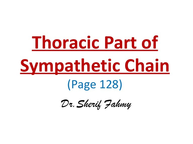 Thoracic Part Of Sympathetic Chain Anatomy Of The Thorax