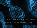 The Three Branches of Biotechnology