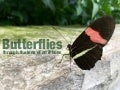 Though The Lens of an iPhone: Butterflies