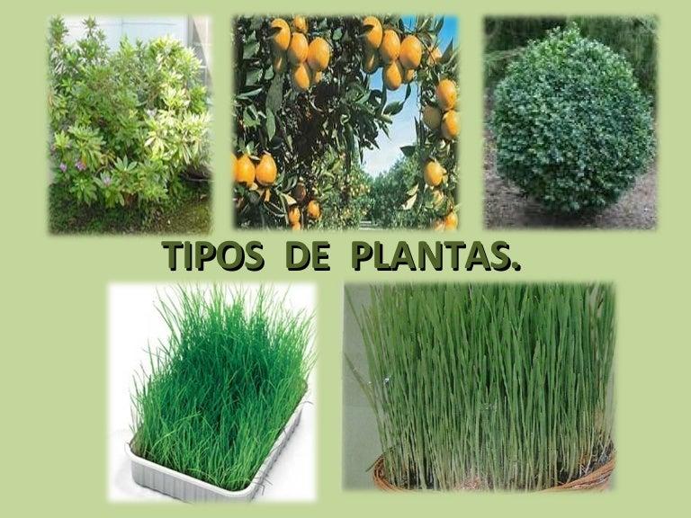 Tipos de plantas for Tipos de estanques para acuicultura