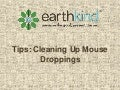 Tips for Cleaning Up Mouse Droppings