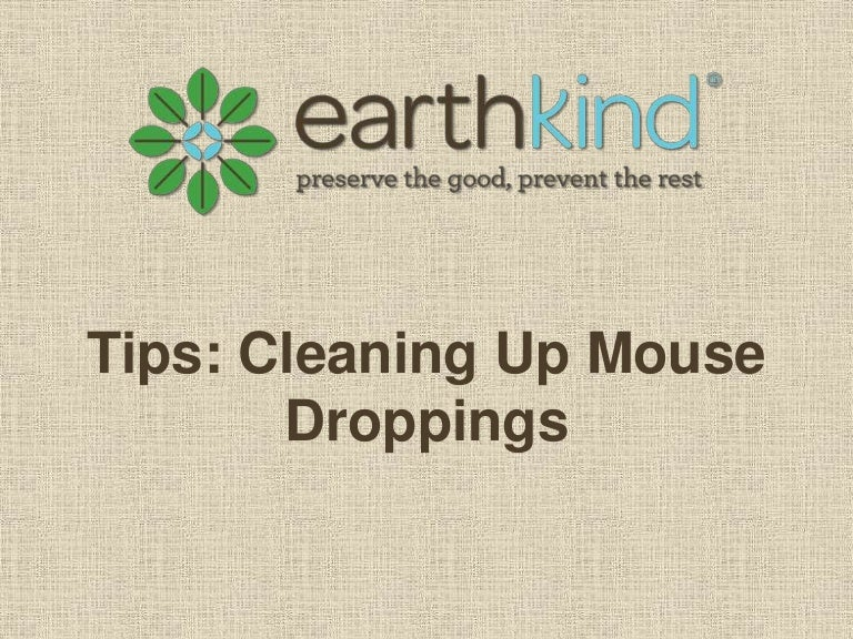how to clean mouse droppings alberta