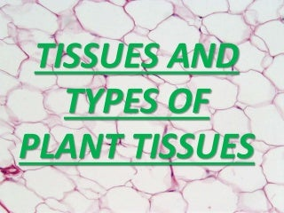 Tissues and types of plant tissues