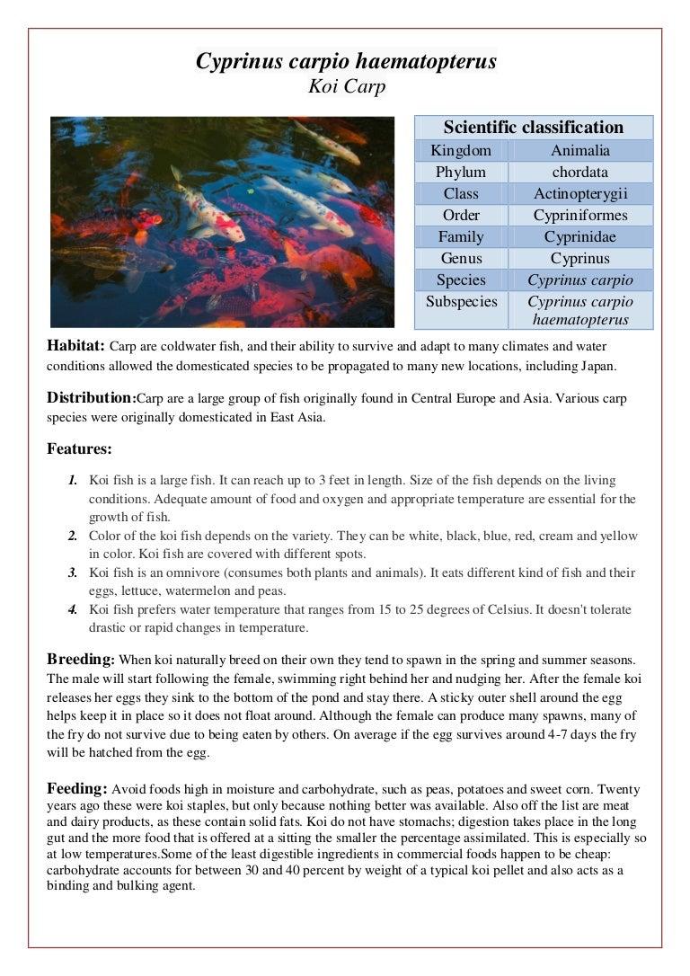 Ornamental Fish Booklet