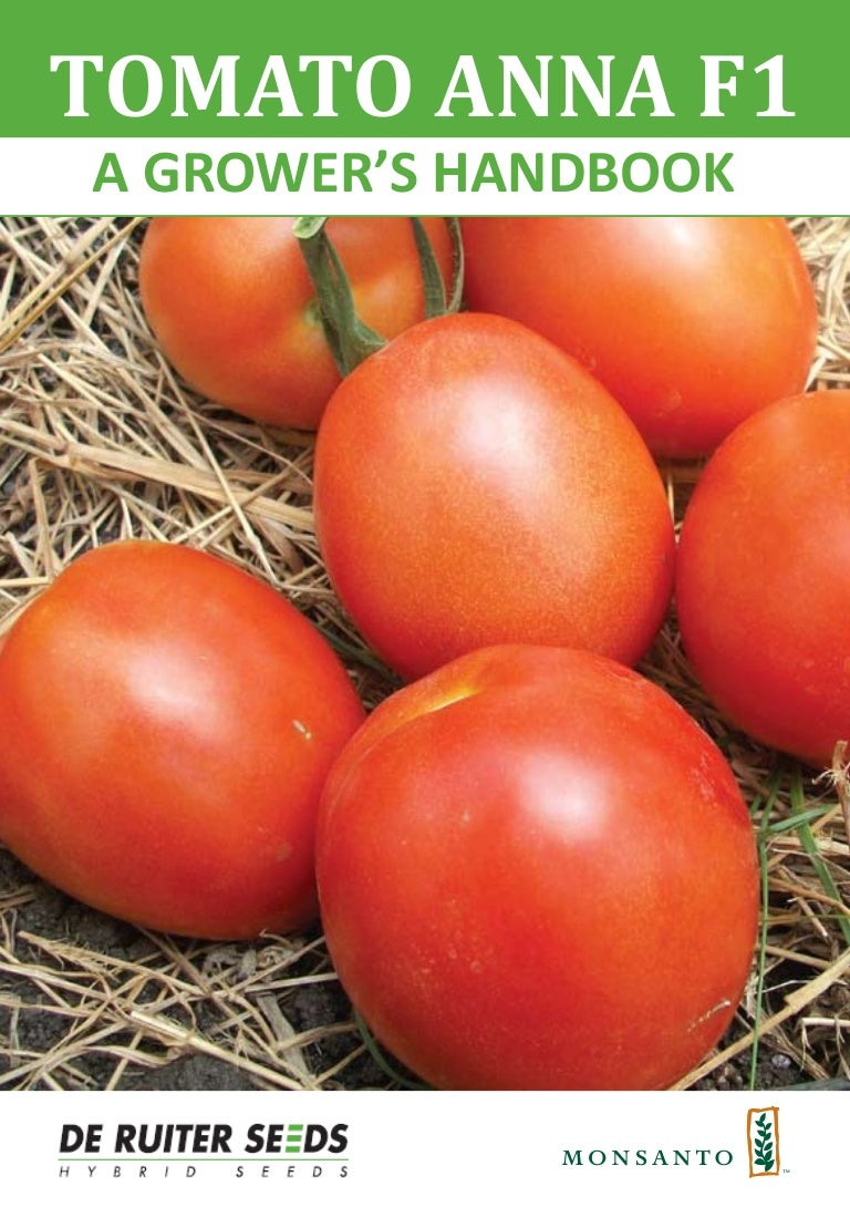 Top dressing tomato in greenhouse and open field yeast: recipes, rules, reviews 50