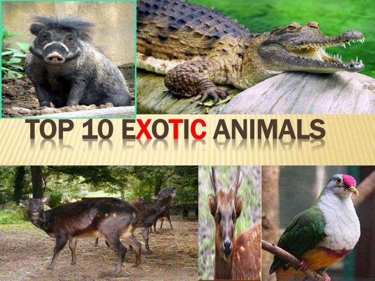 Top 10 Exotic Animals