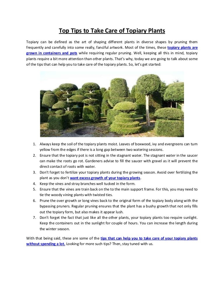 Top Tips To Take Care Of Topiary Plants