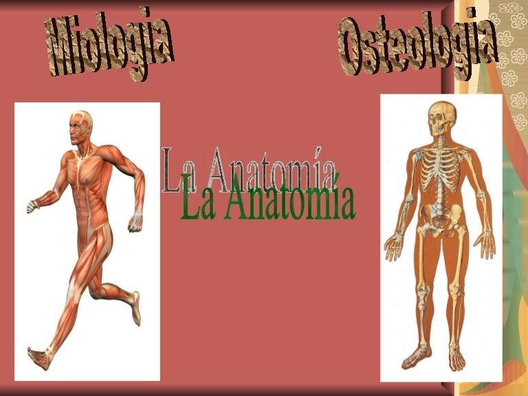 Único Definición De La Anatomía En La Biología Colección de Imágenes ...