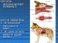 Tracheotomy, By Dr. Rekha Pathak, Senior scientist IVRI