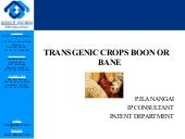 Transgenic crops boon or bane