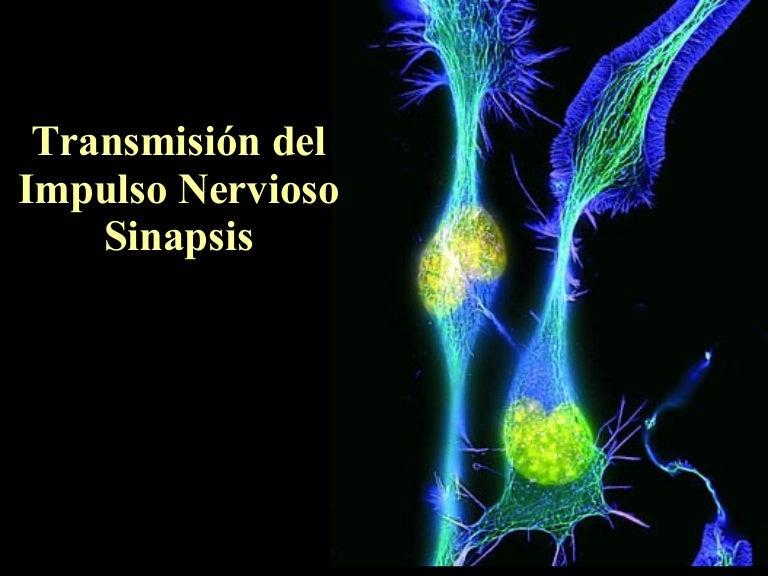 Resultado de imagen de Por lo tanto, los impulsos eléctricos nerviosos pasan a los extremos de las neuronas