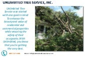 Tree Service Baltimore - Call Today