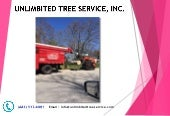 Tree Trimming & Removal Services - Baltimore MD