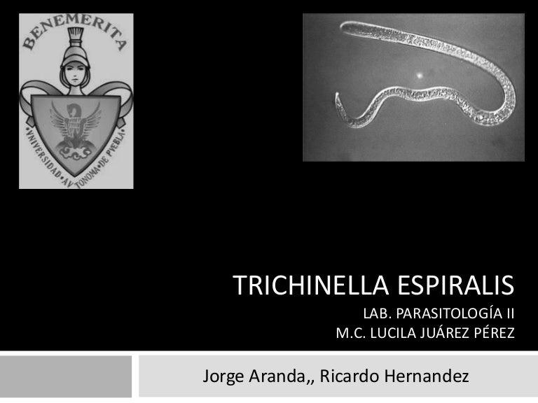 Trichinella van