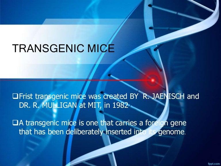 Transgenic mice trmice 161117061036 thumbnail 4gcb1479363292 toneelgroepblik Images