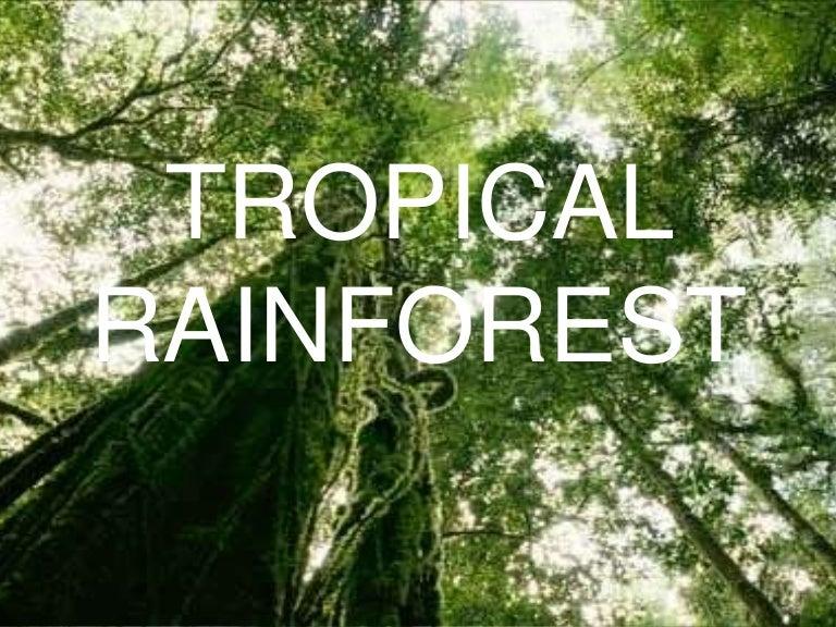 rainforest powerpoint