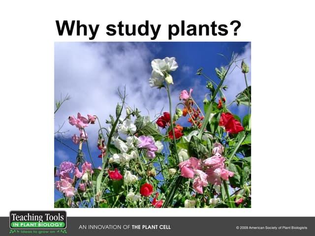 Ttpb1 whystudyplants