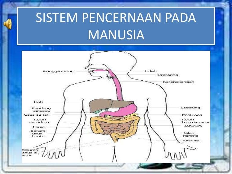 Power Poin Sistem Pencernaan Pada Manusia