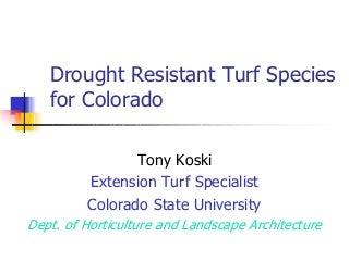 Turf Drough Tresistance