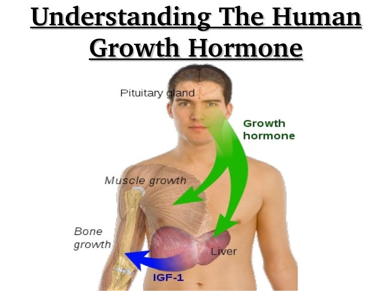 the importance and use of the human growth hormone Hgh for sale (human growth hormone) however, it is important to note that human growth hormones high demand makes it a very expensive supplement.
