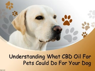 Understanding What CBD Oil For Pets Could Do For Your Dog