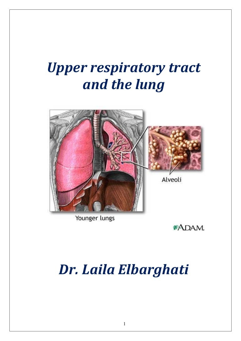 Upper respiratory tract and the lung (1)