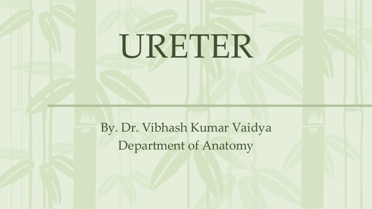 Anatomy Of Ureter