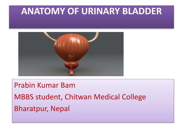 Urinary bladder (Anatomy)