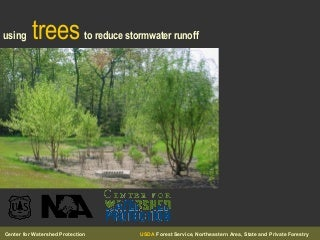Using Trees To Reduce Stormwater Runoff