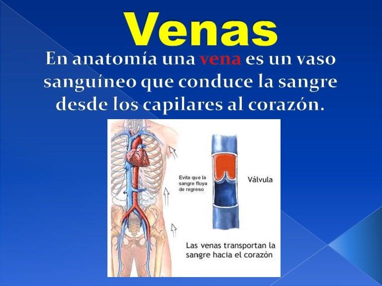 ¿cuál es la vena principal en el cuerpo humano