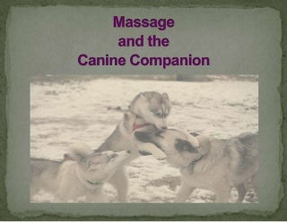 veterinarymassagepresentation-1105201940