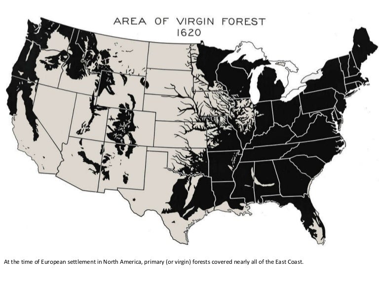 Show A Map Of The United States Of America.Virgin Forests Cover In The U S