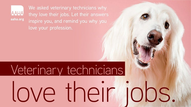 Vet Tech Quotes Fascinating Veterinary Technicians Love Their Jobs