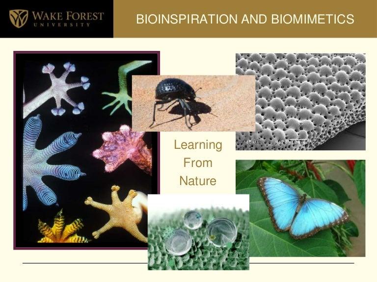 Resultado de imagen de insects bioinspiration