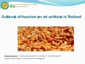 Outbreak of Fusarium ear rot on Maize in Thailand