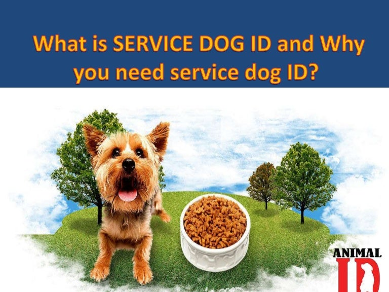 What Is Service Dog Id And Why You Need Service Dog Id