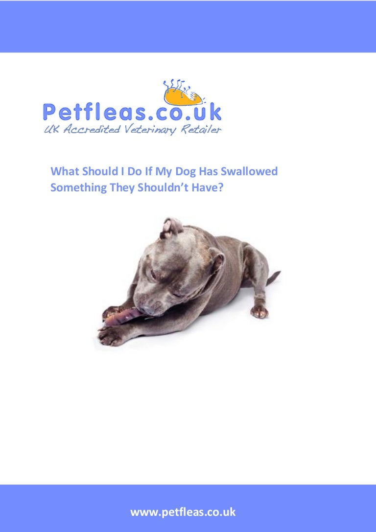 What should i do if my dog has swallowed something they shouldn\'t have
