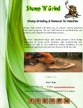 What stump grinding options do you have