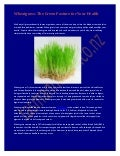 Wheatgrass: The Green Pasture for Your Health