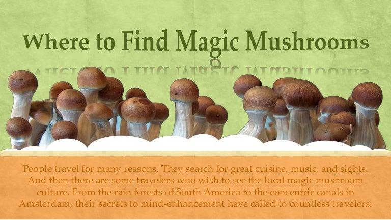 how to get magic mushrooms