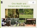 One Health and Conservation Strategies
