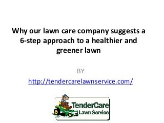 Why our lawn care company suggests a 6 step approach to a healthier and greener lawn