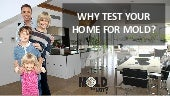 Why Test Your Home For Mold?